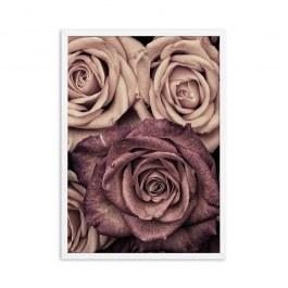 Vintage růže plakát